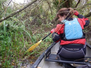 WKCC Scouring the reeds